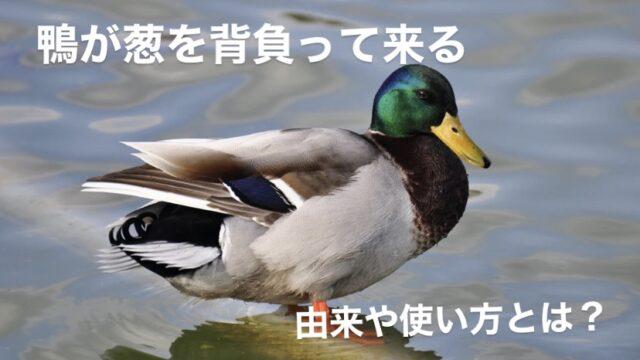 鴨が葱を背負って来る