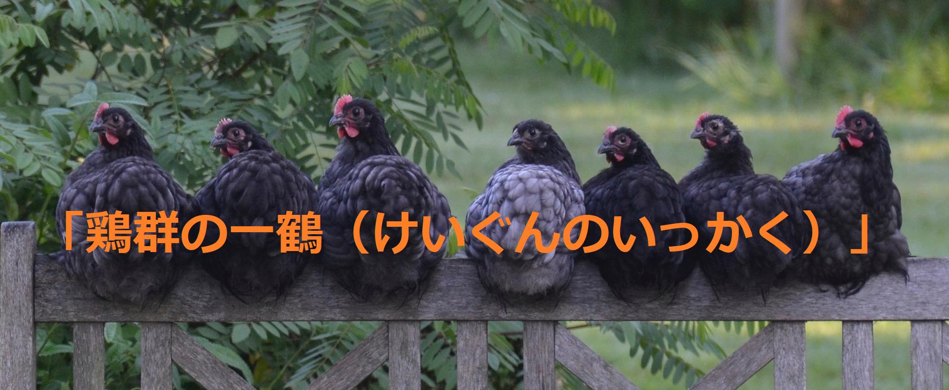 黒いニワトリ数匹