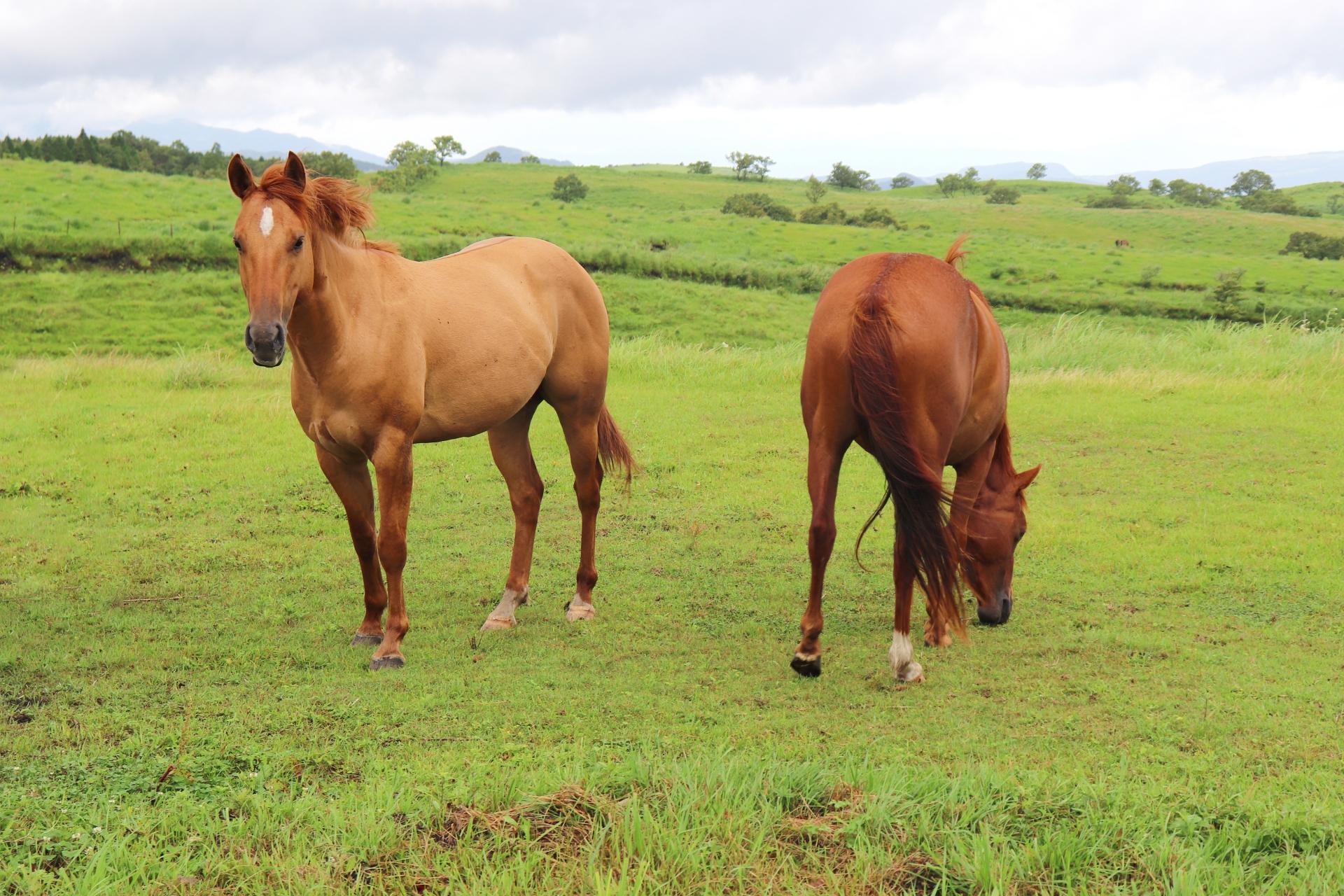 癖ある馬に能あり 語源