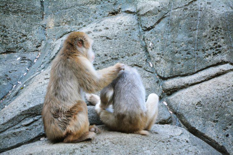 仲間を慰める猿