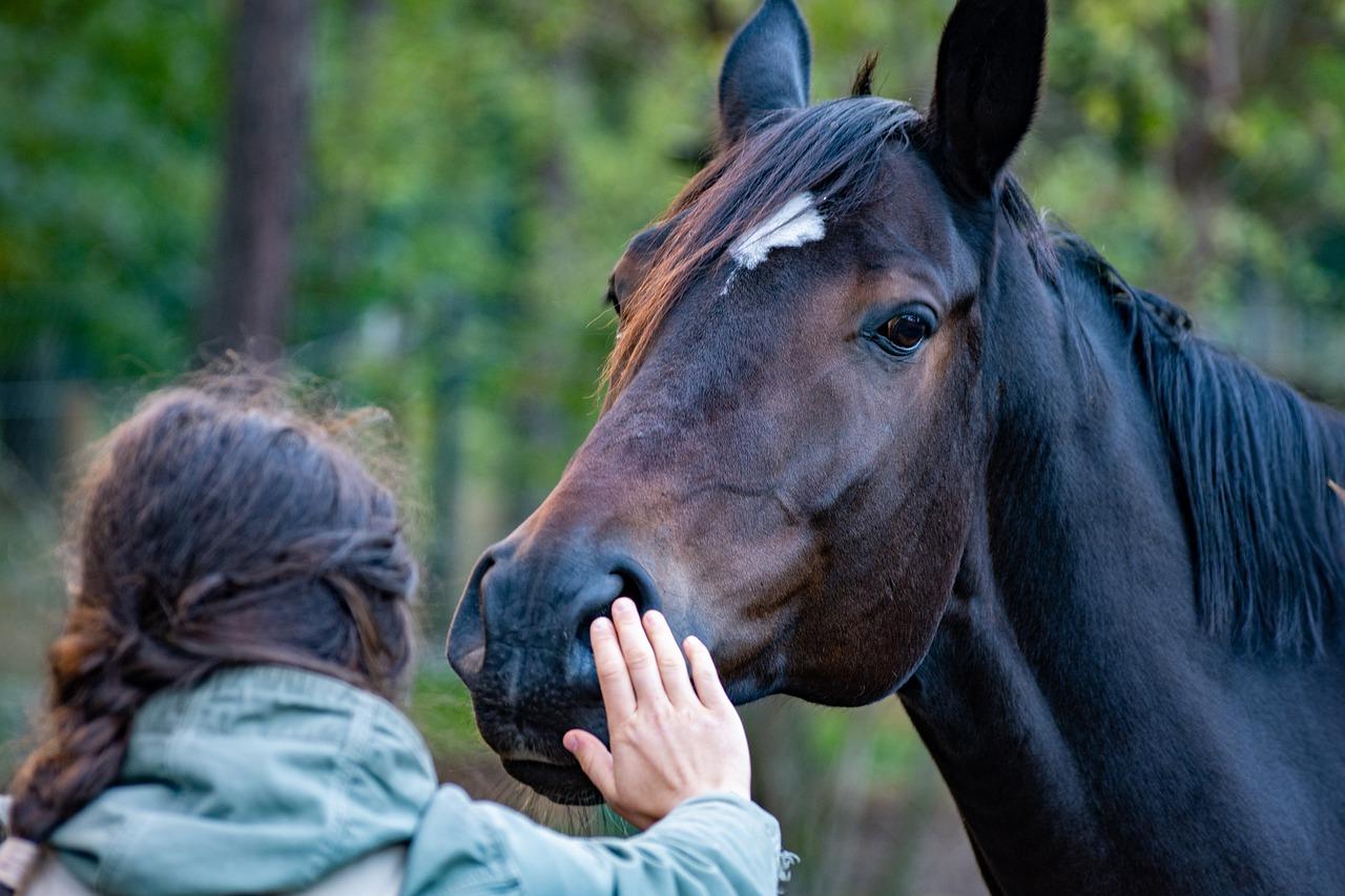 馬を手なずける