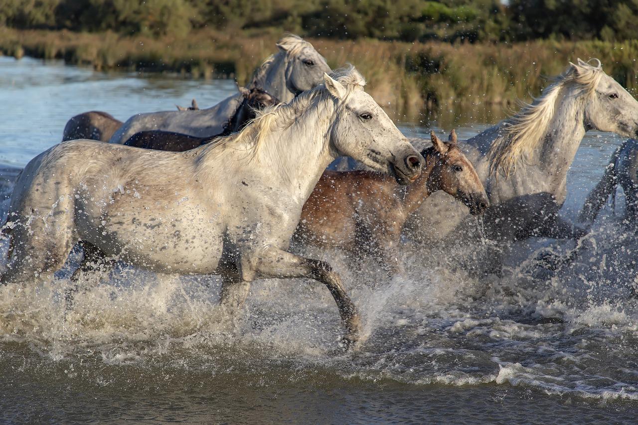 激しく駆ける馬