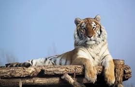 苛政は虎よりも猛し 意味