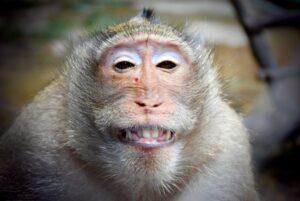 猿の尻笑い 意味