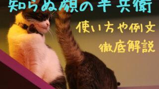 知らぬ顔の半兵衛 猫