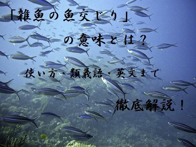 魚のアイキャッチ